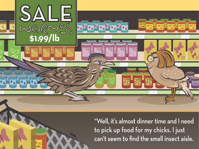 """""""Well, it's almost dinner time and I need to pick up food for my chicks. I just can't seem to find the small insect aisle."""